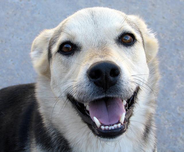 Dog Smiling: Animals Dental Hygiene