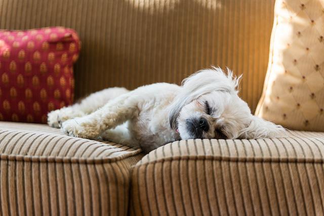 Dogs Sleeping Disorders