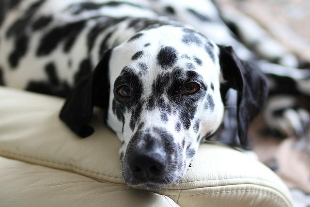 Understanding Your Dogs Sleeping Pattern