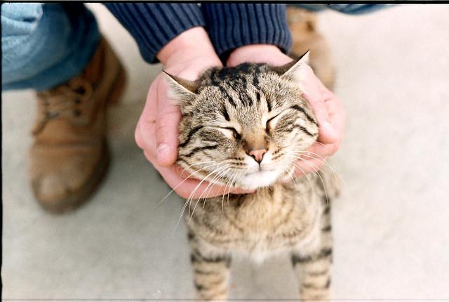 Pet Cat for How to Treat Pet Allergies