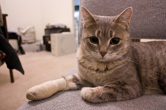 What to Do for Your Pet in a Pet Emergency