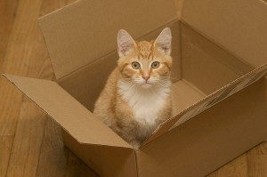 Cat in Box - Why Do Cats Love Boxes?