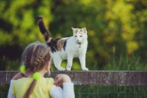 Pet Assure cat enjoying the summer.