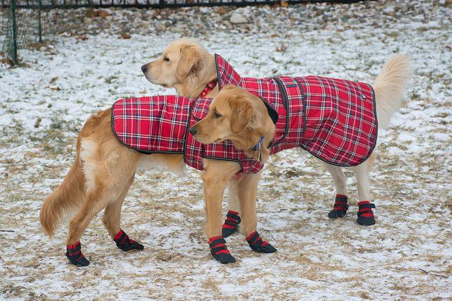 Dogs Dressed In Winter Gear